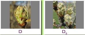 Frutales - Mediorural xunta es oficina agraria virtual ...